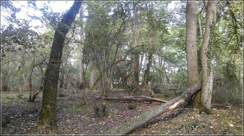 Yıkılmış ağaçlar