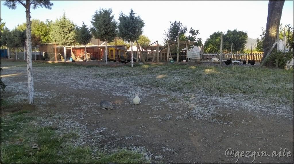 Çınar Aile Çay Bahçesi Ve Piknik Alanı