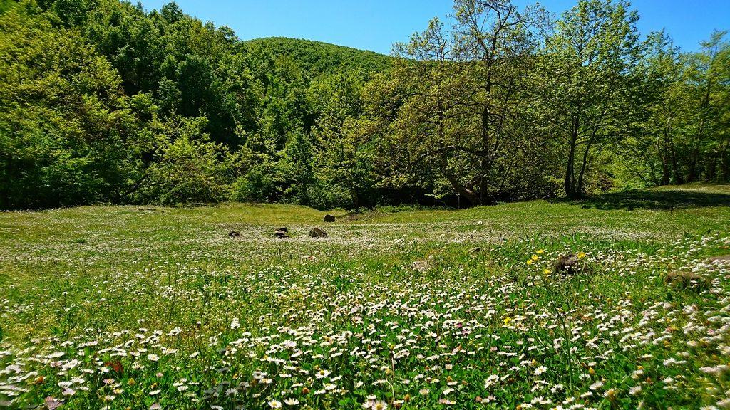 Ormanlı Köyü